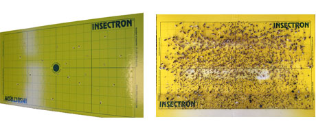 Insectron - high-performance glue boards